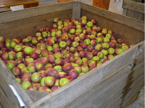 Don't forget to pick up your apples and fresh apple cider donuts at Everett Orchard while in season