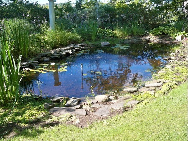 Goldfish pond at the Senator's Mansion