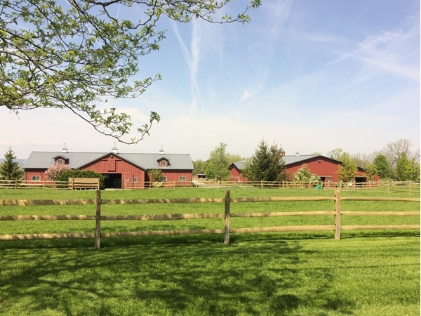 Wonderful farm in the area that breeds, trains and shows Morgan horses