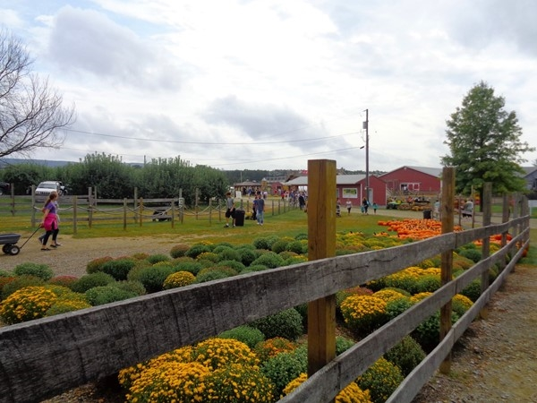 Harvest Season in the Hudson Valley is here. Time to stop by Barton Orchards