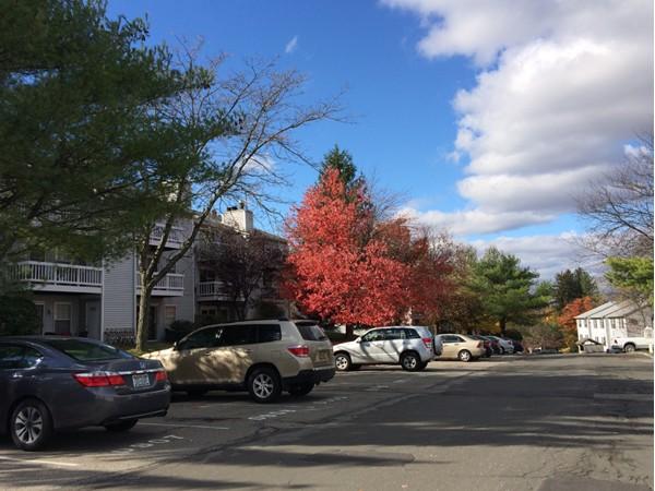 Fall in Lexington Hills