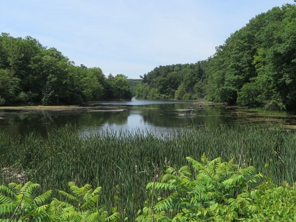 Serene picture of one of the many small ponds in the Durand Eastman Park in Irondequoit