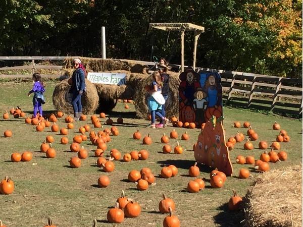 Enjoying Halloween at Maples Farm