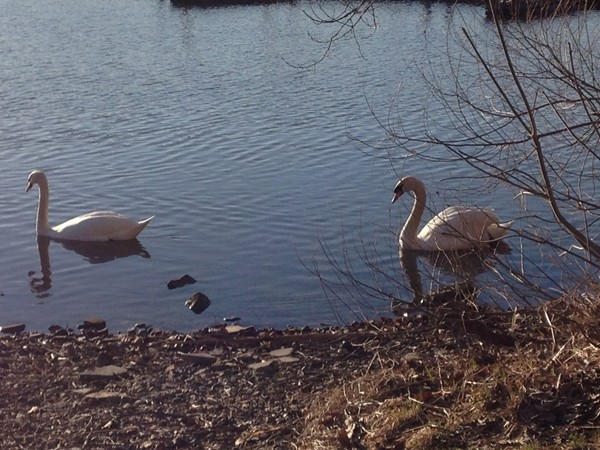 A walk along the bay is a great way to start the day and these guys are happy it's spring too