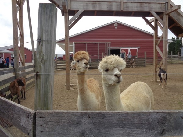 Enjoy farm animals, hayrides, a corn maze, sweet treats and live music at Barton Farms