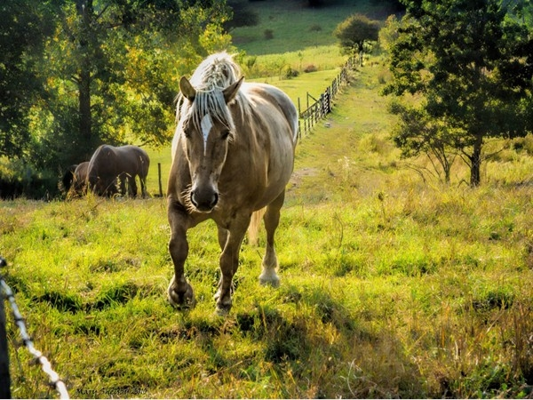 The rolling hills of Mendon are dotted with beautiful horse farms