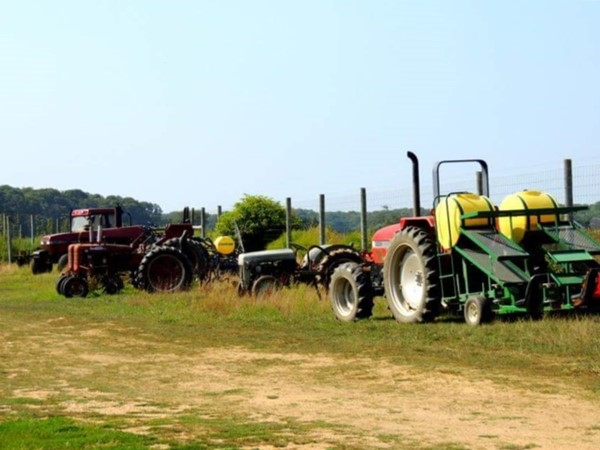 There are a lot of farms in Riverhead