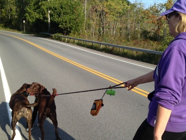 Many residents take advantage of a sunny day and quiet roadways for a walk with the dog