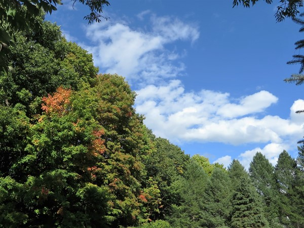 Early October in Graham Creek Heights with the trees beginning to show a tinge of color