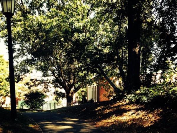 Scenery at Long Island University (CW POST)