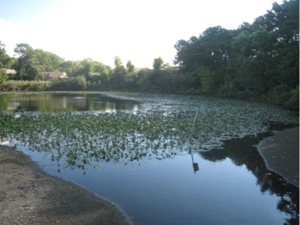 Gibbs Pond across from the park