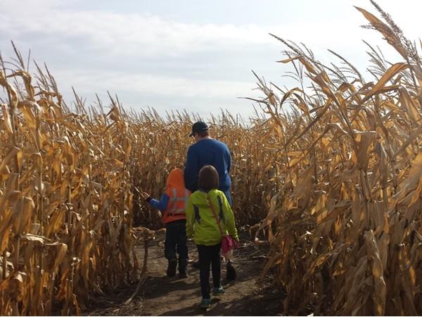 Cambria Corn Maze. Fun and educational!