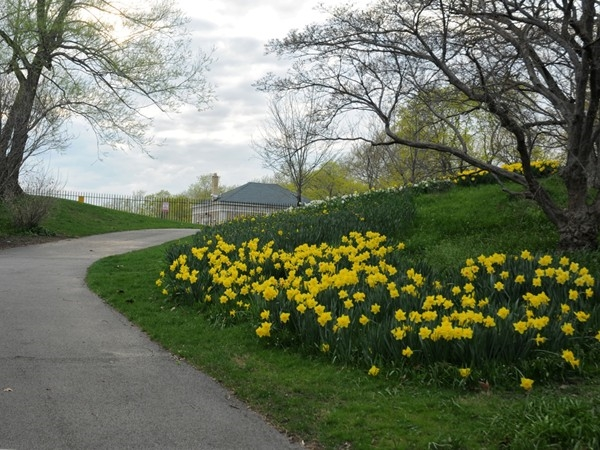 Rochester's Highland park features 150 acres of masterfully  planned landscape.