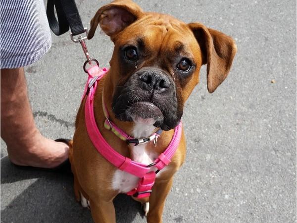 Troy Farmers Market - doggies. Grace - what a cutie