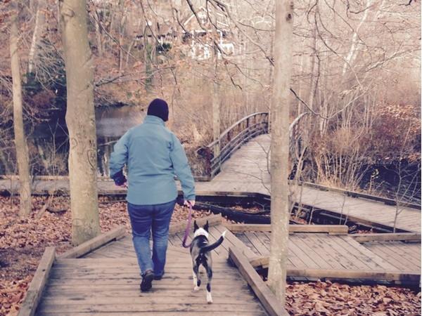 Boardwalk, Avalon Park and Preserve. Stony Brook, NY