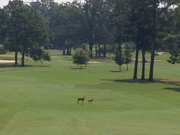 Beautiful golf course at the Country Club of Jackson