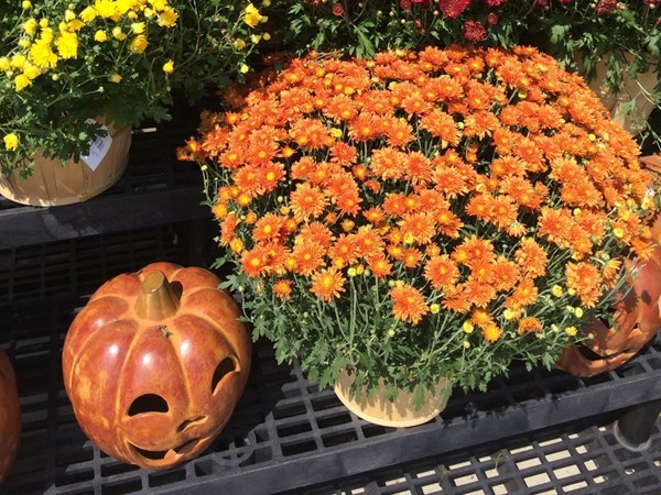 Fall is right around the corner! Looks like local Byram businesses are getting ready for it!
