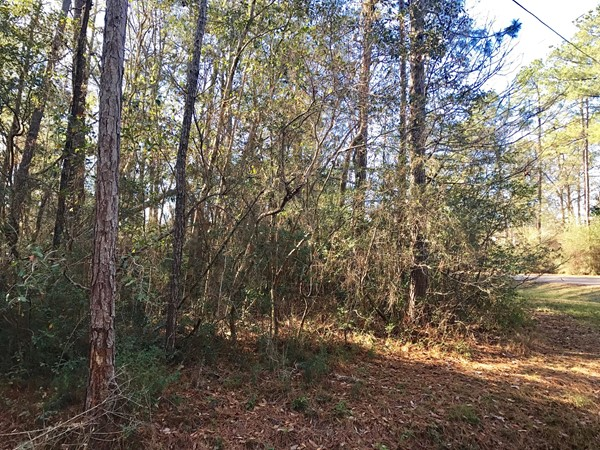 Lots of wooded land for sale ready for your custom home