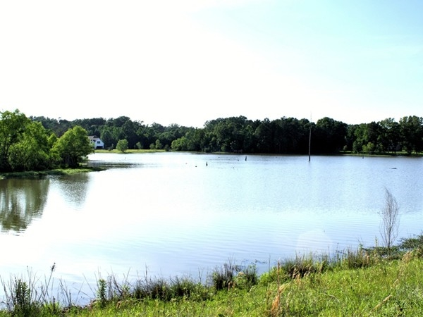 Portion of the lake in the North Brandon Shores section of North Brandon Estates