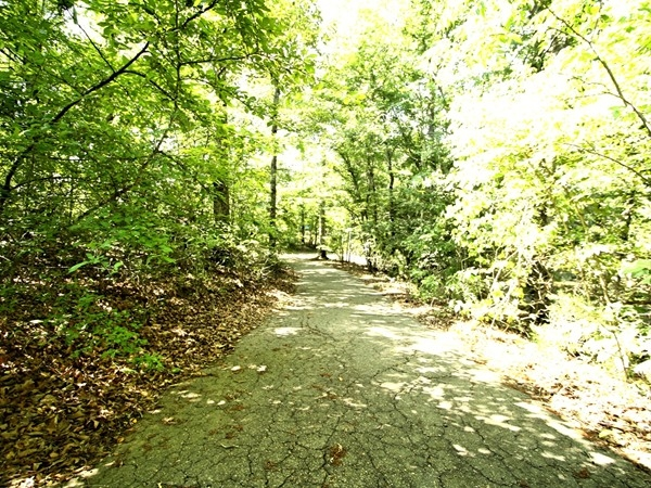 Beautiful scenery on the walking trail