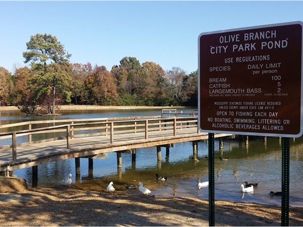 Olive Branch City Park Fishing