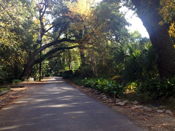 The perfect Southern town. Biking on a beautiful day on oak lined roads and trails