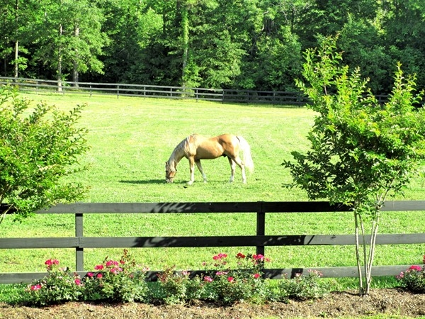 Enough acreage for horses