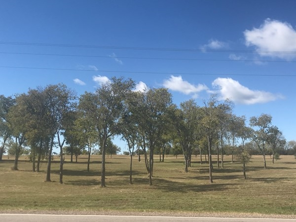 Wooded lot in Lake Lavon